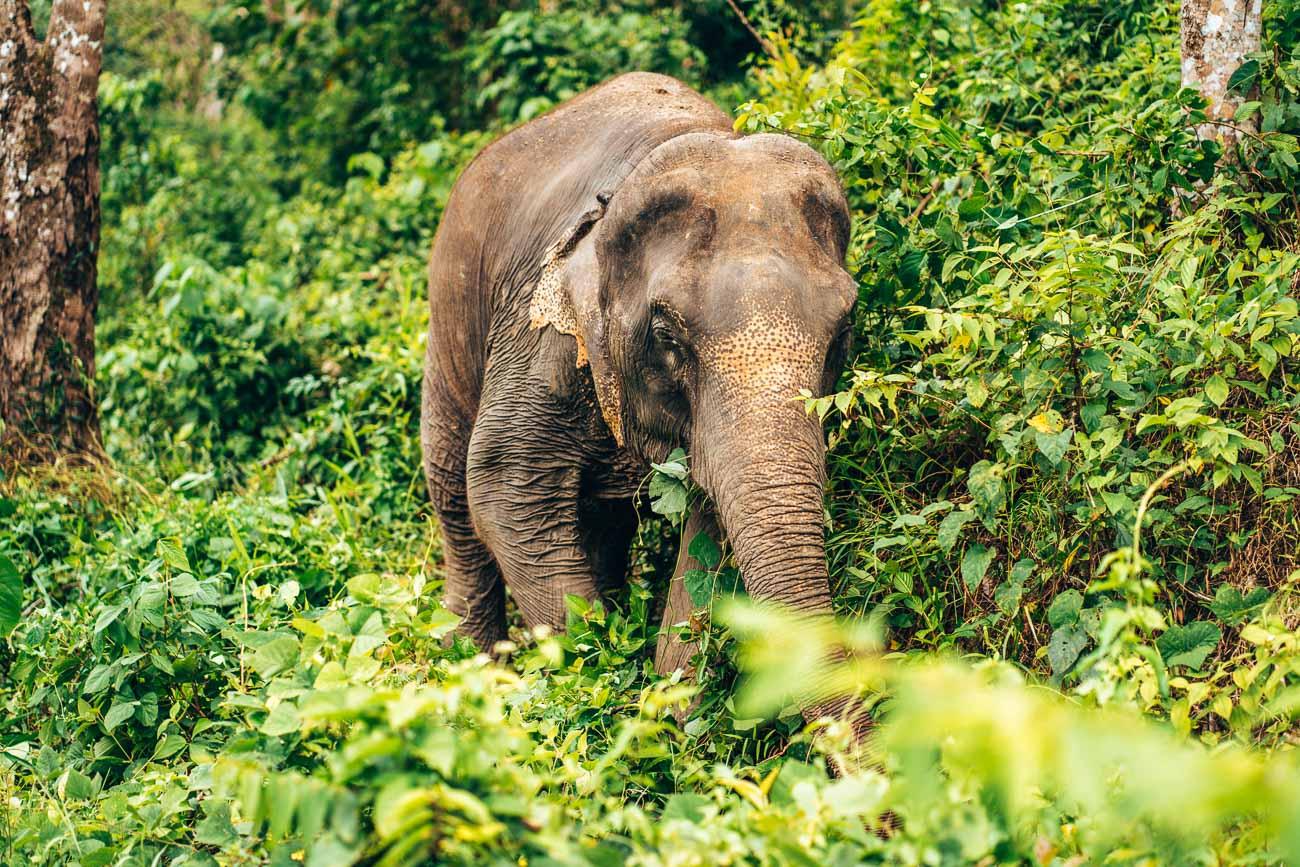 Elephant Sanctuary Phuket