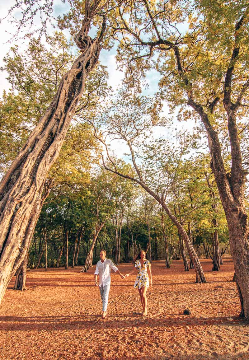 el mangroove costa rica beach