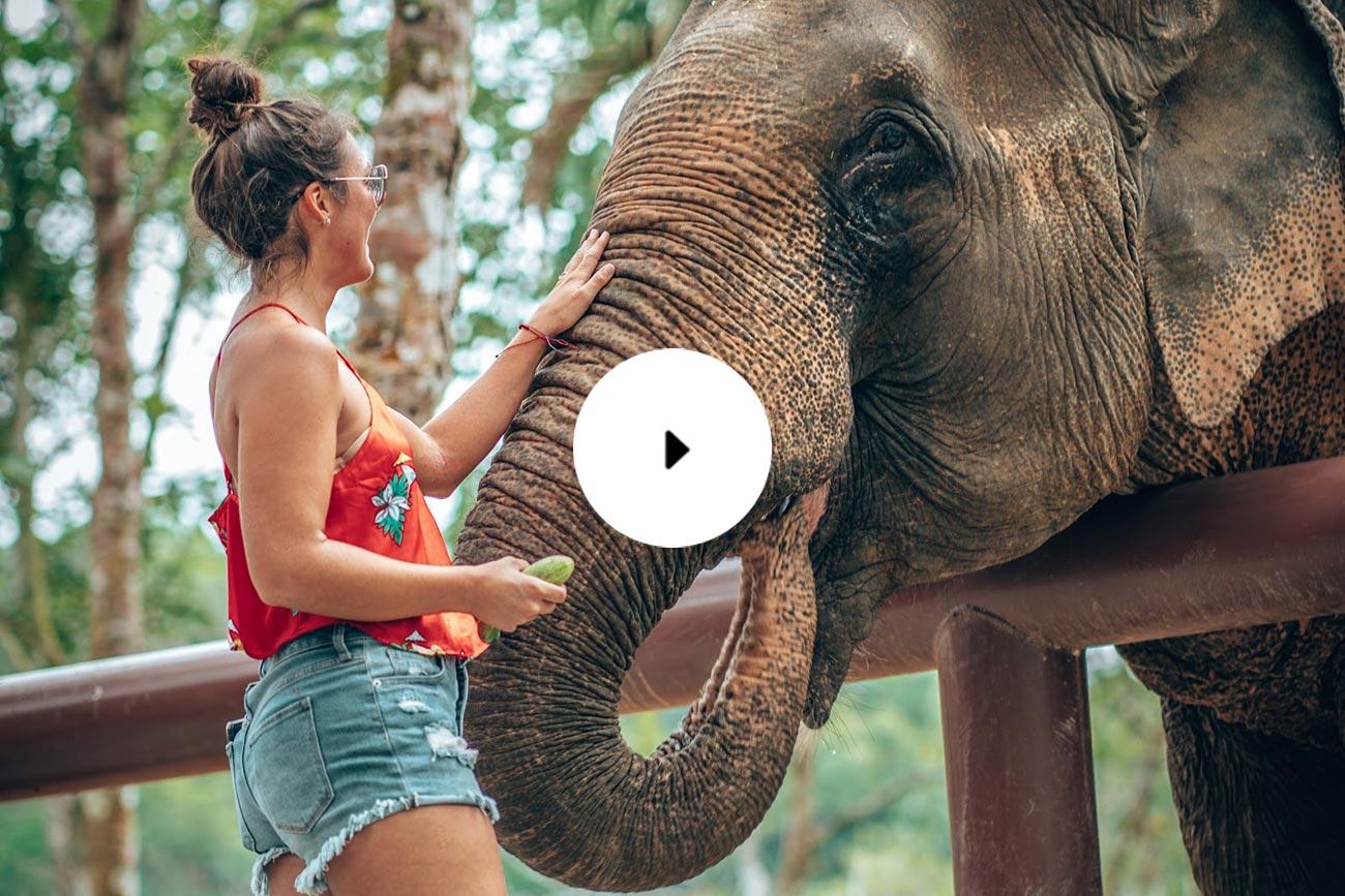 woman feeding elephant phuket elephant sanctuary