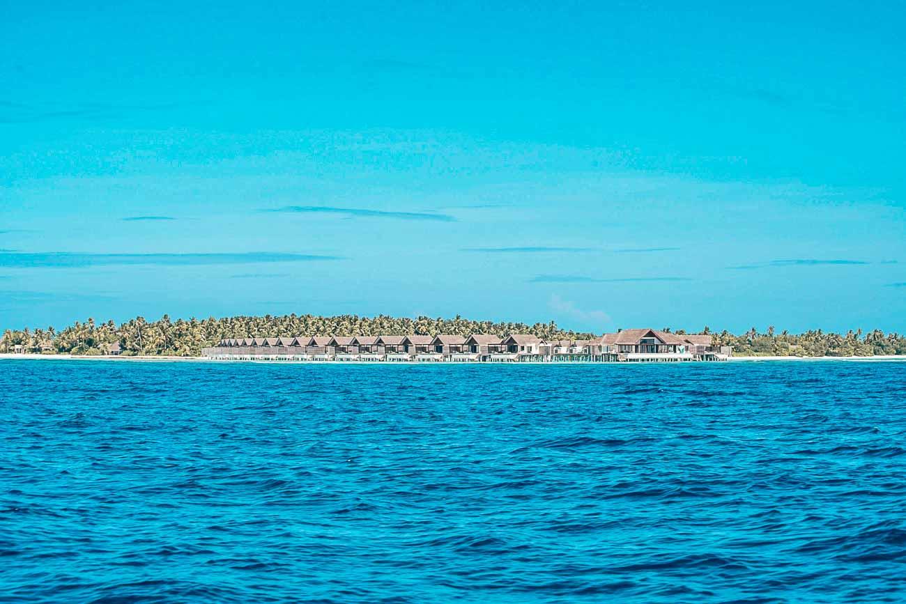 dolphin cruise niyama maldives