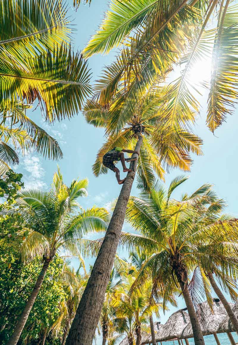 misa climbing a tree at serenity island resort fiji