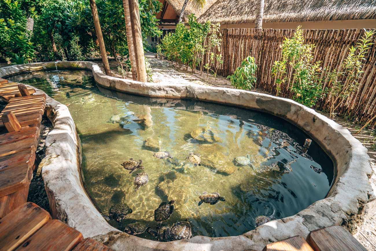 turtle sanctuary at serenity island fiji
