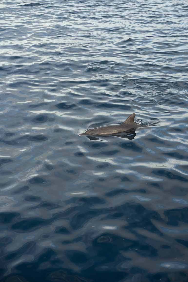sunset dolphin excursion at The Residence Maldives
