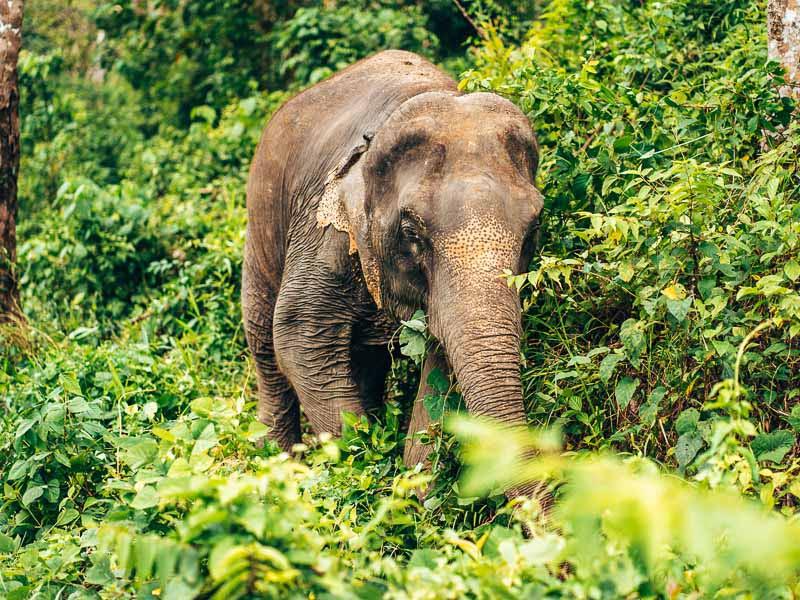 phuket elephant home